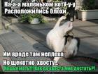 https://lolkot.ru/2019/03/12/hvostatyye-zaboty/