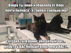 https://lolkot.ru/2016/02/15/i-kto-iz-nas-blohastik/