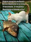 https://lolkot.ru/2013/03/26/i-vsya-nedolgo/