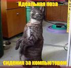 https://lolkot.ru/2010/06/11/idealnaya-poza/