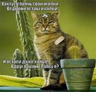 https://lolkot.ru/2013/03/26/igly-pryach-poel/