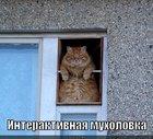 https://lolkot.ru/2011/11/17/interaktivnaya-muholovka/