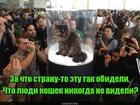 https://lolkot.ru/2019/08/31/iskupleniye-obidy/