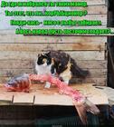 https://lolkot.ru/2017/06/09/izbiratelnoye-obedaniye/
