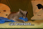 https://lolkot.ru/2010/07/26/izmena/
