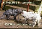 https://lolkot.ru/2014/05/30/izvalyay-i-zhratstvuy/