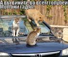 https://lolkot.ru/2013/06/18/kak-golubi/