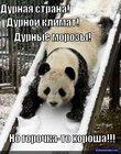 https://lolkot.ru/2011/03/19/kak-ni-kruti-horosha/
