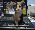 https://lolkot.ru/2013/01/08/kakaya-bol/