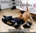 https://lolkot.ru/2012/08/18/kakaya-raznost/