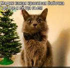 https://lolkot.ru/2014/12/14/kakaya/