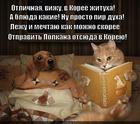 https://lolkot.ru/2014/12/09/kanikuly-v-koreye/