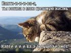 https://lolkot.ru/2013/06/04/kaptiva/