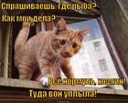 https://lolkot.ru/2014/11/20/karas-v-ogorode/