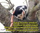 https://lolkot.ru/2013/03/20/kep/