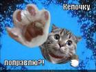 https://lolkot.ru/2012/09/24/kepochku-popravlyu/