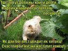 https://lolkot.ru/2014/12/01/kidnepper-so-stazhem/