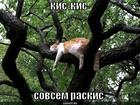 https://lolkot.ru/2010/02/12/kis-kis/