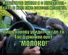 https://lolkot.ru/2014/11/04/kisamolochnyy-navigator/