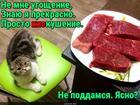 https://lolkot.ru/2018/09/20/kiskusitelnoye-ugoscheniye/