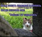 https://lolkot.ru/2014/11/20/kladoiskatel/