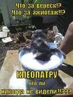 https://lolkot.ru/2013/08/14/kleopatra-shtol/