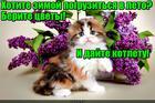 https://lolkot.ru/2016/11/14/klyuch-k-letu/