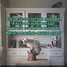 https://lolkot.ru/2014/02/15/knopochka/