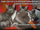 https://lolkot.ru/2011/11/08/kogda-oni-zasnut/