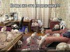 https://lolkot.ru/2012/06/29/kogda-zhe-eta-moderatsiya/