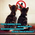 https://lolkot.ru/2020/07/03/kognitivnyye-vykrutasy/