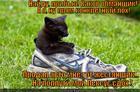 https://lolkot.ru/2014/01/13/kolymaga/