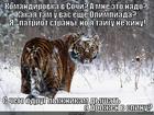 https://lolkot.ru/2014/02/08/komandirovka-2/