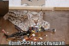 https://lolkot.ru/2012/08/24/komp/