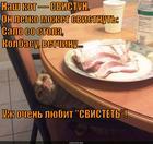 https://lolkot.ru/2014/11/21/koshachiy-svistun/