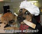 https://lolkot.ru/2010/09/19/koshatinka/