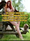 https://lolkot.ru/2017/05/04/koshechka/