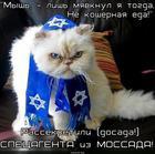 https://lolkot.ru/2014/06/21/koshernyy-spetsagent/