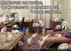 https://lolkot.ru/2013/11/06/koshka/