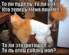 https://lolkot.ru/2013/10/23/koshkopudesh/