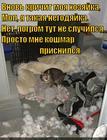 https://lolkot.ru/2014/12/15/koshmariki-u-kosharika/
