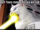 https://lolkot.ru/2012/05/09/kot-chaka/