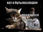 https://lolkot.ru/2013/01/15/kot-i-butylka-vodki/