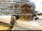 https://lolkot.ru/2010/06/09/kot-kritik/