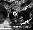 https://lolkot.ru/2011/10/21/kot-vedmy/