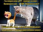 https://lolkot.ru/2015/02/02/kotayskiy-bolvanchik/