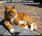 https://lolkot.ru/2011/07/14/kote-odobril/