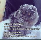 https://lolkot.ru/2014/03/15/kotenok-2/