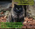 https://lolkot.ru/2015/02/17/koteyka-v-lesu/