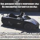 https://lolkot.ru/2017/02/24/kotiki-rulyat/